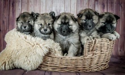 15 Trendy manden voor je liefste huisdier