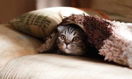 15 cadeaus voor als je verliefd bent op je kat