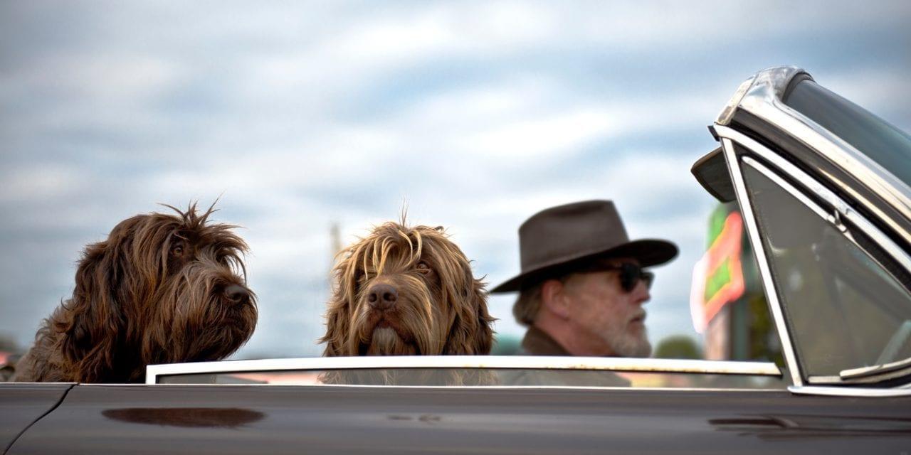 11 Manieren om makkelijk met je hond te reizen (in de auto)