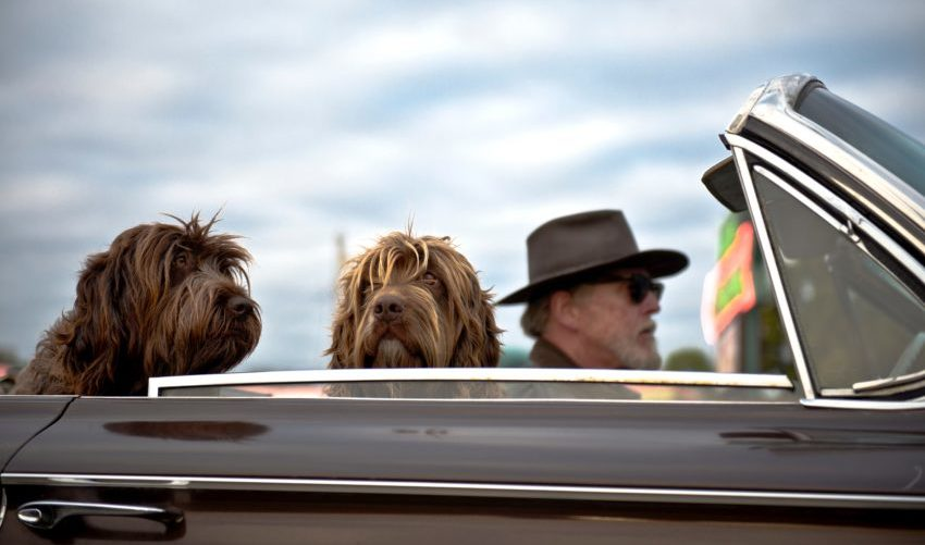 Huisdieren op reis in auto